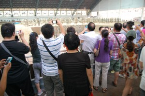 Tourists take photos of the Terracotta Army in Xi'an, China with their smartphones. The rise of social networking in China means millions of photos, blogs and messages are shared daily.